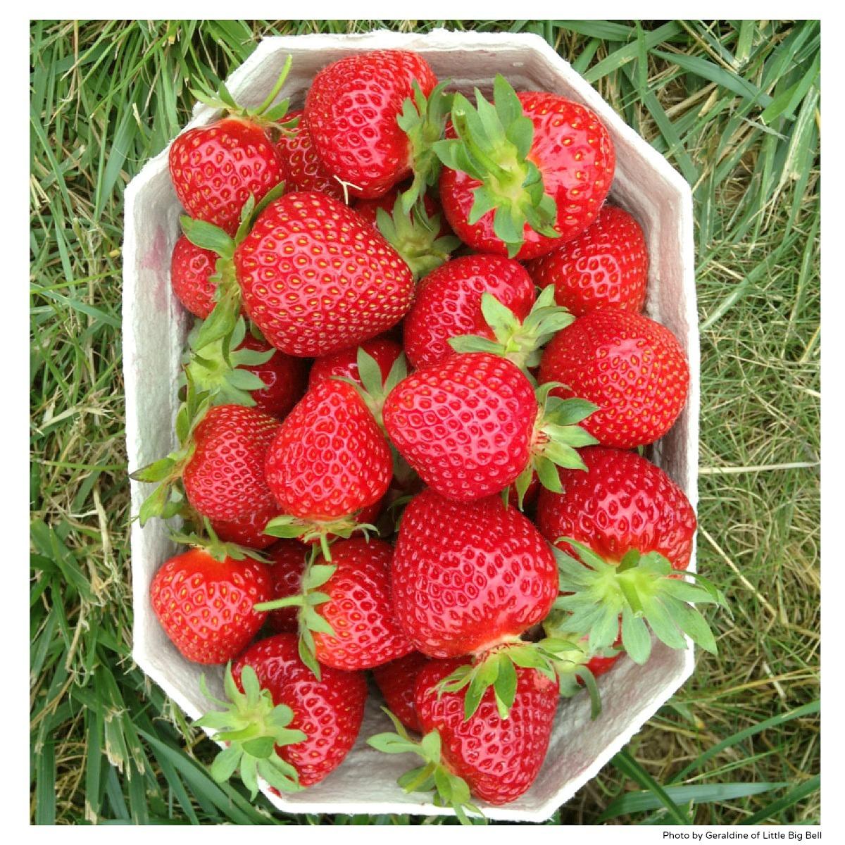 Strawberries-Daylesford-organic-farm