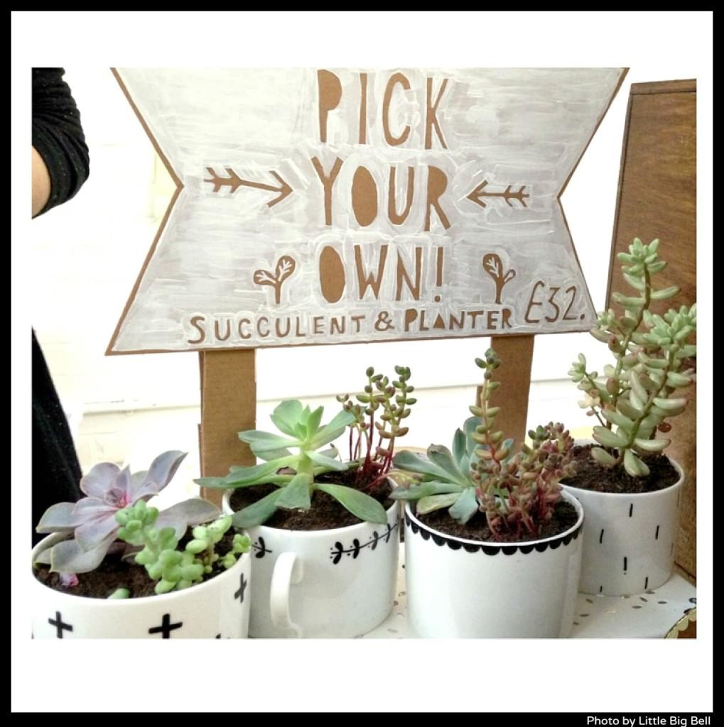 Oh-no-Rachio-Rachel-Basinger-succulent-kit-and-planter-photo-by-Little-Big-Bell