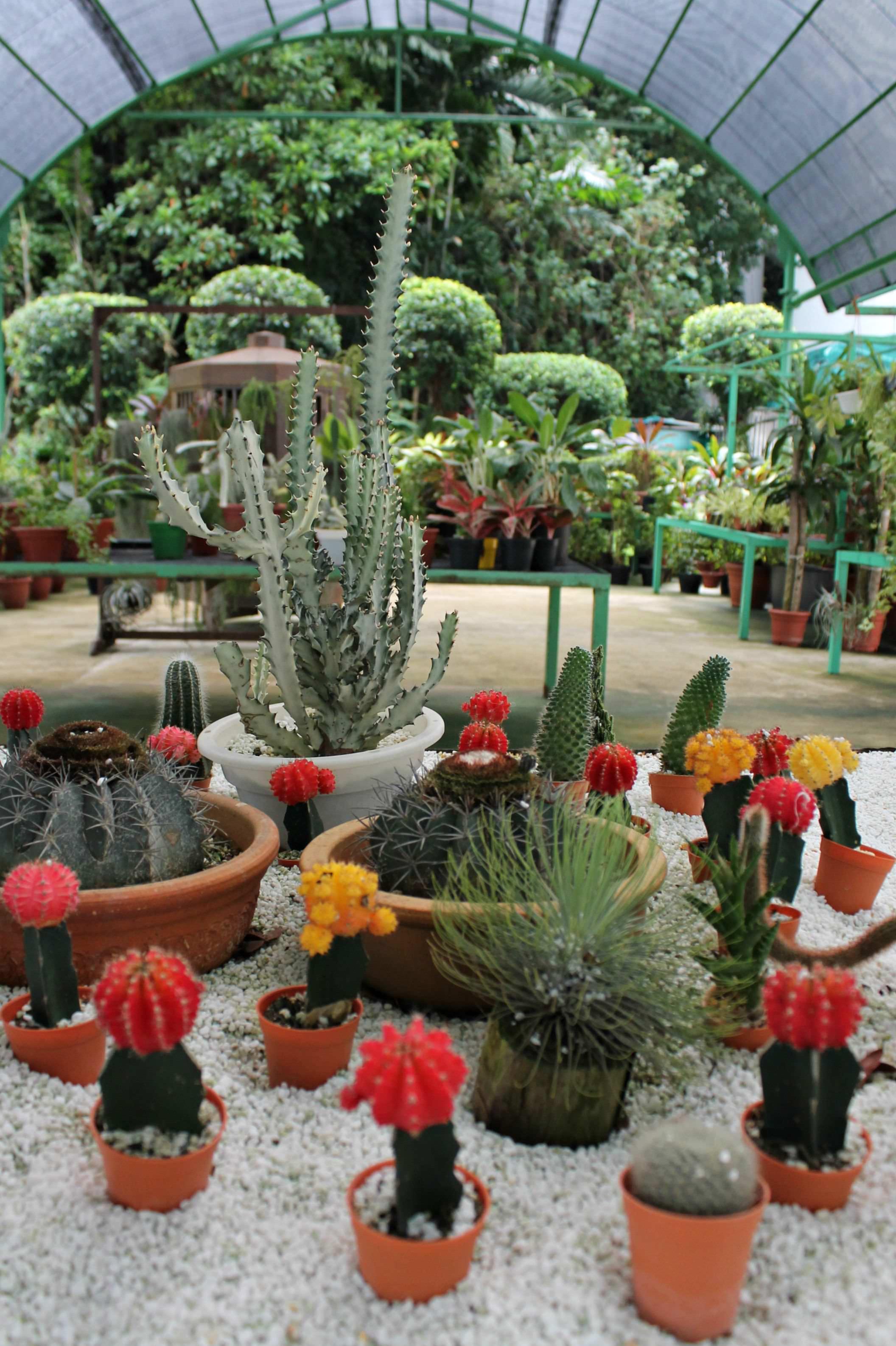 Rasa-Sentosa-resort-and-spa-garden-photo-by-Little-Big-Bell