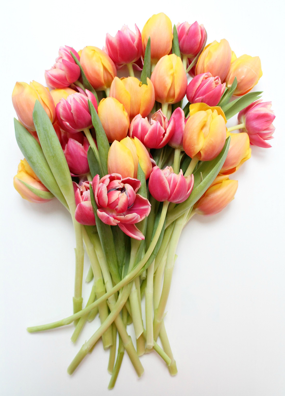 Preparing-Tulips-Little-Big-Bell